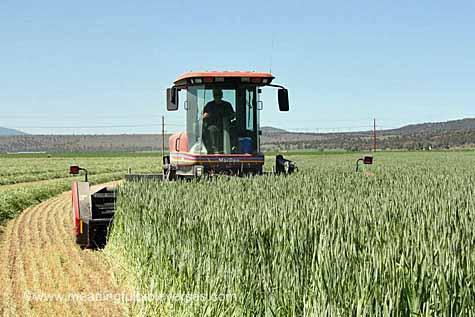 Worker in a Field